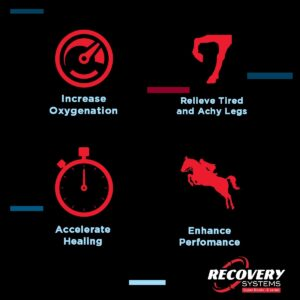 Recovery System Equine